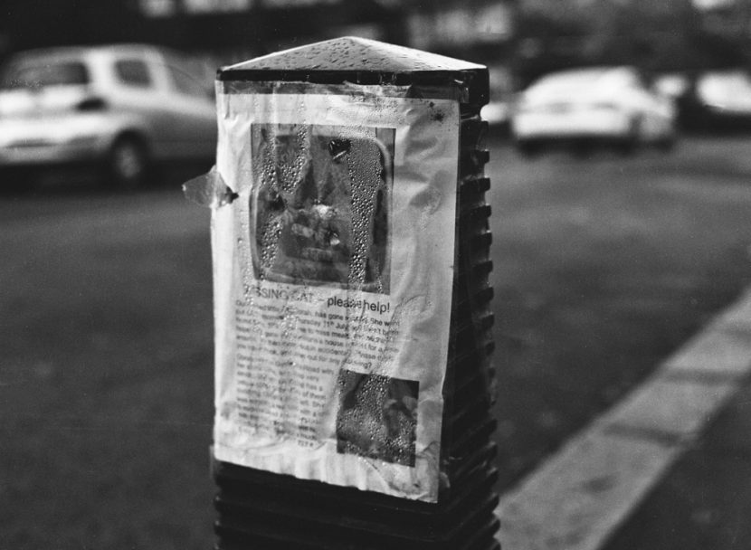 A noticed of a missing cat attached to a post in a street